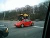 beetle-quad